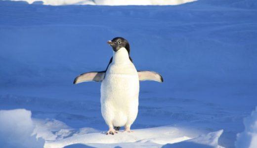 Googleの「パンダアップデート」と「ペンギンアップデート」ってなに?