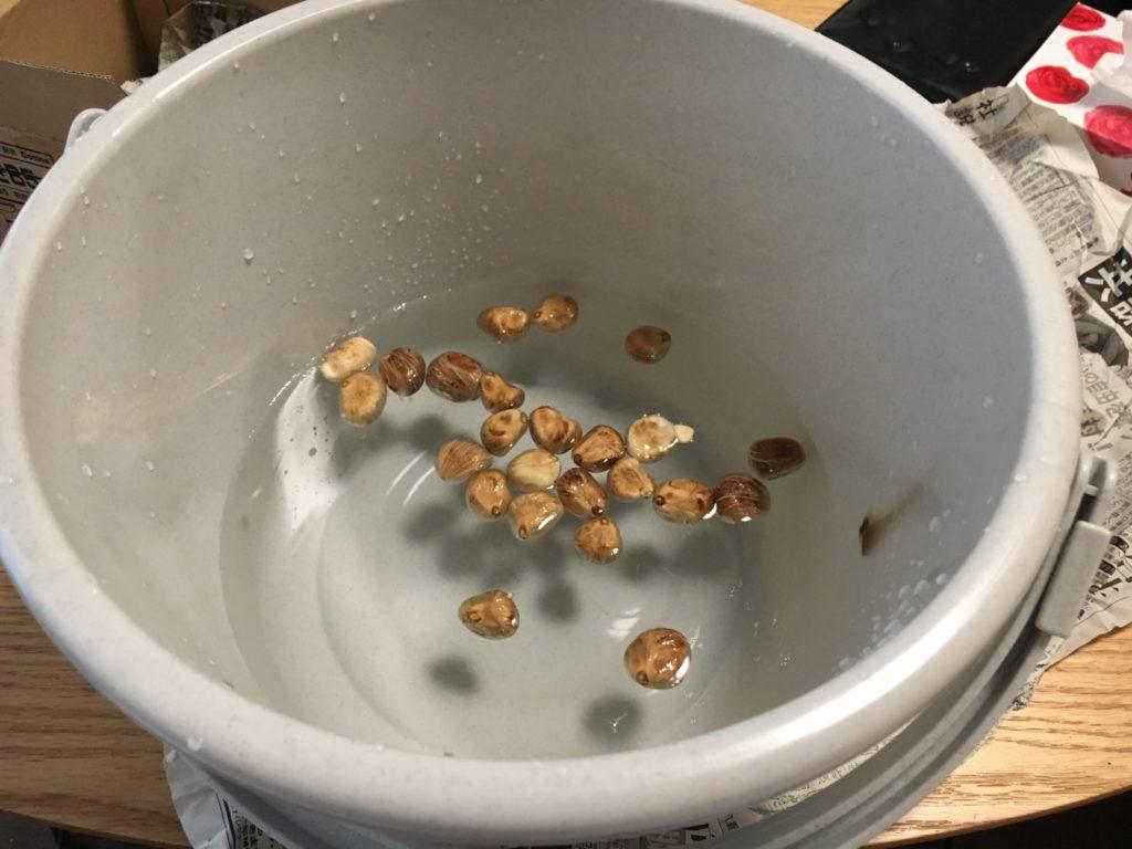 実から取り出した種の水没検査